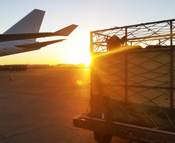 Cattle export airfreight