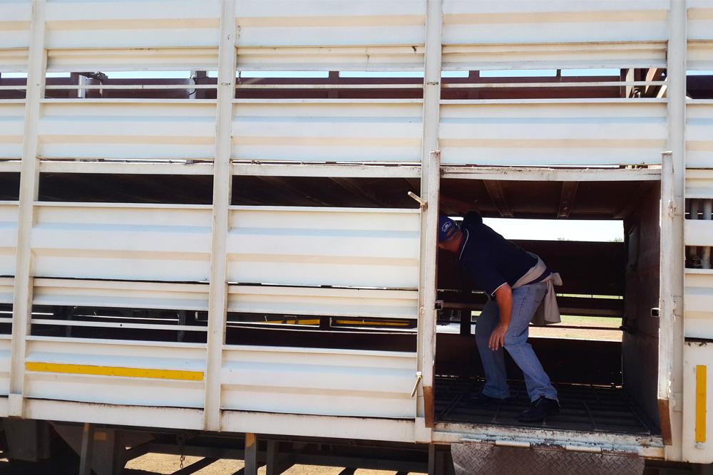 Cattle transport inspection