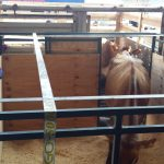 Loading into cattle crate